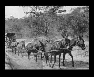 "AN EIGHT SPAN DONKEY CART IN CHIMANIMANI DISTRICT (From Marie de Bruijn's talk ""Transport Routes in Gazaland"")"