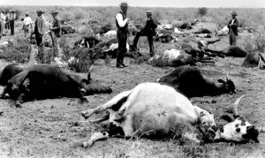 "RINDERPEST VIRUS - KILLED 90% OF CATTLE IN SOUTH AFRICA IN THE 1890'S FROM DR. GLYN VALE'S TALK ""HUMANS AND TSETSE FLIES"""